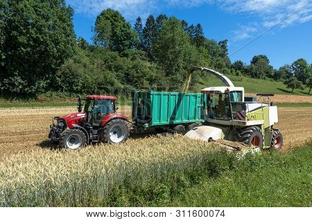 Harvest Of Whole Plant Silage With Forage Harvester And Tractor With Trailer On A Cereal Field