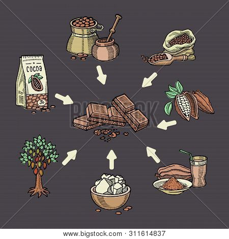 Super Food Chocolate Collection For Infographic. Pod, Beans, Sugar, Cocoa Butter, Chocolate, Cacao D