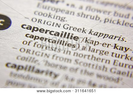 Word Or Phrase Capercaillie In A Dictionary