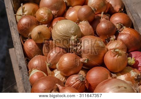 Fresh Onions. Onions Background. Ripe Onions. Onions In Market. Harvest Onions. A Pile Of Raw Onion