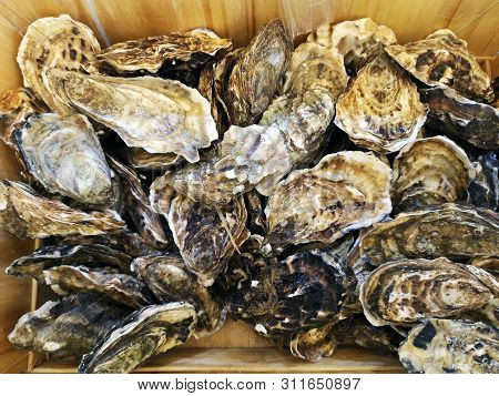 Oysters On The Counter In Wooden Boxes On The Market. Oysters For Sale At The Seafood Market. Fish M