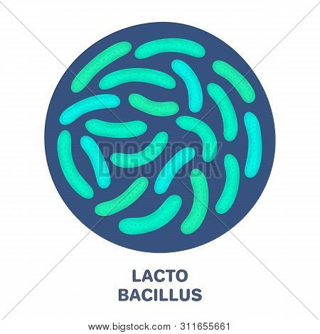 Vector Probiotics In Circular Shape. Lactobacillus. Microbiome. Medicine Or Dietary Supplement. Broc