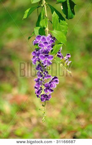 Tropical Purple Flowers