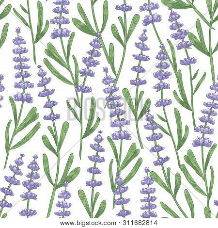 Botanical Seamless Pattern With Lavender Flowers Hand Drawn On White Background. Backdrop With Meado
