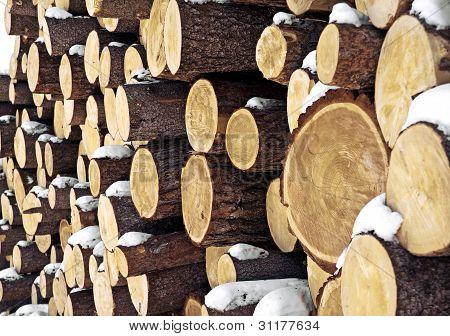 Closeup logs
