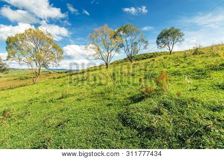 Trees On The Grassy Hillside In Early Autumn. Beautiful Scenery At High Noon. Fluffy Clouds On The S