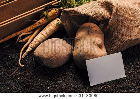 Organic Farming Of Parsley And Potato With Business Card Mock Up, Homegrown Vegetable Food Productio