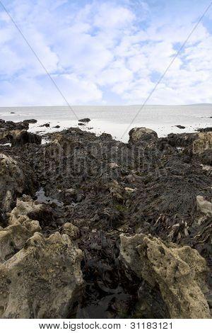 Seaweed Caught On Many Rocks