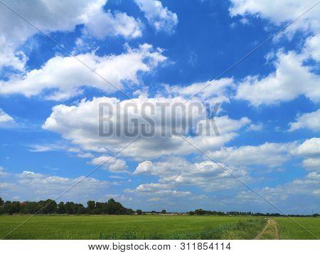 White Clouds In The Blue Sky Natural Background Nature Rice Tree Grassy Lush Verdancy Verdant Verdan