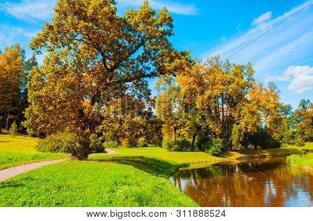 Autumn landscape - yellowed deciduous autumn trees at the bank of the river in city autumn park area. Colorful autumn landscape scene