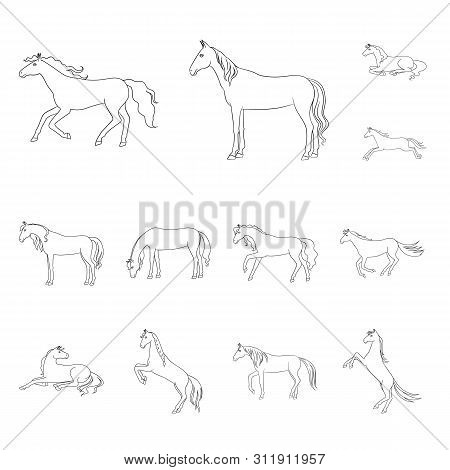 Vector Illustration Of Galloping And Farm Icon. Set Of Galloping And Mustang Stock Symbol For Web.