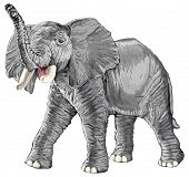 elephant with raised trunk isolated on white background / eps10 poster