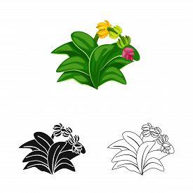 Vector Illustration Of Leaf And Banana Sign. Set Of Leaf And Jungle Stock Symbol For Web.