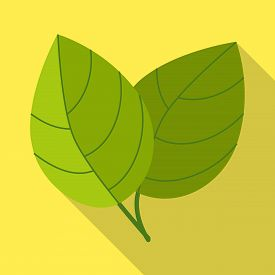 Isolated Object Of Leaf And Ginger Icon. Set Of Leaf And Plant Stock Symbol For Web.