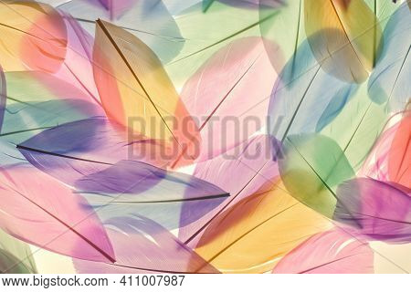 Feathers Multicolored Background In Pastel Colors. Feathers Set Pattern. Natural Pastel Feathers In
