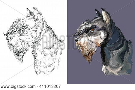 Realistic Head Of Miniature Schnauzer. Vector Black And White And Colorful Isolated Illustration Of