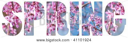 Spring text with pink Redbud tree flowers, on white