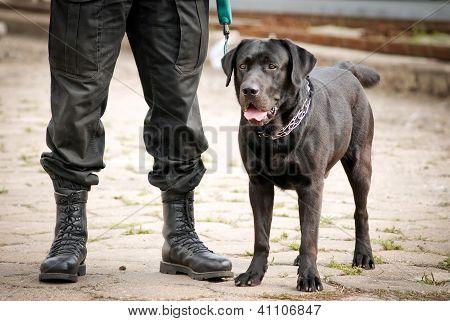 black Labrador Retriever police dog stands next to police officer poster