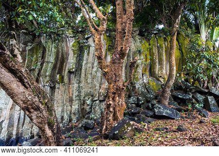 Rock And Trees On Mauritius Island Near Rotchester Falls