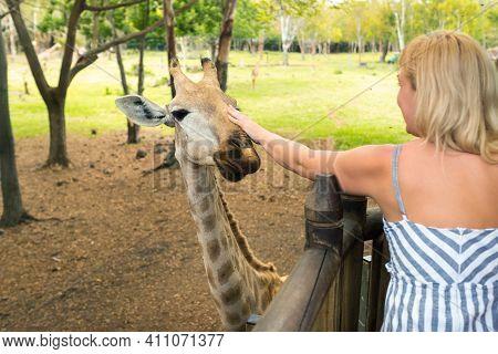 A Girl Feeds A Beautiful Giraffe In The Mauritius Kasela Park.