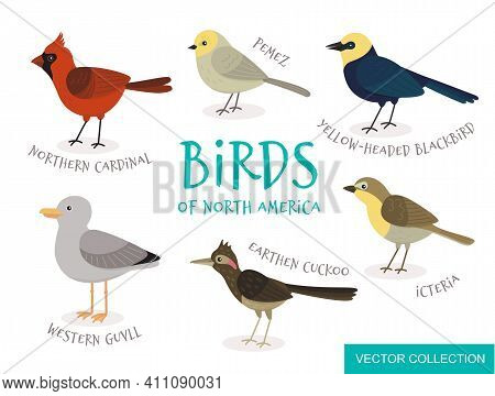 Bird In Flat Style. Vector Collection Of Birds Of North America.