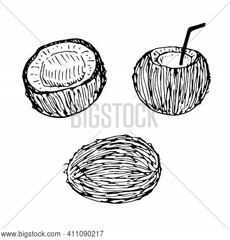 Set Of Coconut Whole Half And Coconut With Straw Vector Illustration Hand Drawing Sketch