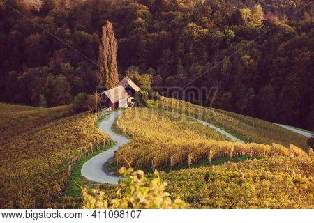 Famous Heart Shaped Wine Road In Slovenia, View From Near Maribor. Natural Landscape Agricultural Ba