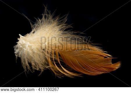 Brown Feathers Of A Hen On A Black Background