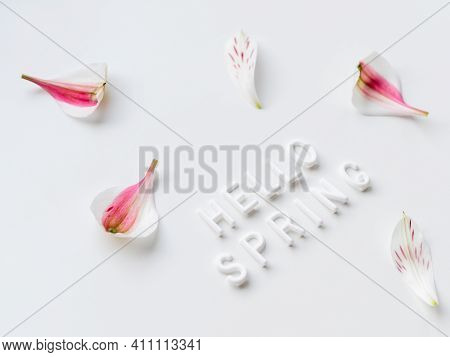 Words Hello Spring With Pink Flower Petals On White Background. Seasons Greetings.