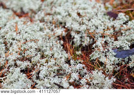 Colorful Forest Floor Of Lichen, Moss, Grass And Other Different Plants, Textures Close-up, Natural