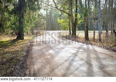A Dirt Bicycle Road In Evergreen Forest. Sun Rays Through The Tree Trunks. Shadows On The Ground. Ea
