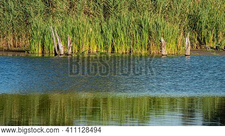 Surface Of The River Waves And Smooth Surface On The Background Of Reeds On A Sunny Day. Spring Seas