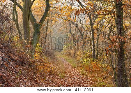A Hiking Trail in Autumn Forest in Germany. poster