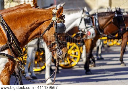 Tourist Carriage Horses In The City Of Seville, Waiting For Clients For The Tourist Route. Seville,