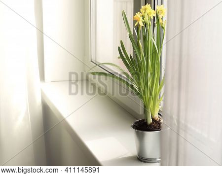 Hello Spring. Waiting For Spring. Home Interior Easter Decoration. Yellow Blooming Daffodils In An A