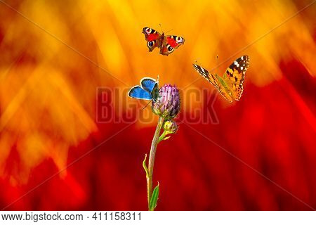 One Butterfly Sits On A Wildflower And Two Other Butterflies Fly In The Epicenter Of A Fire In A Mea