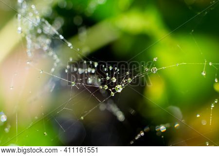 Wet Spider Web With Lots Of Tiny Water Drops On It On Green Leafage Bokeh Background