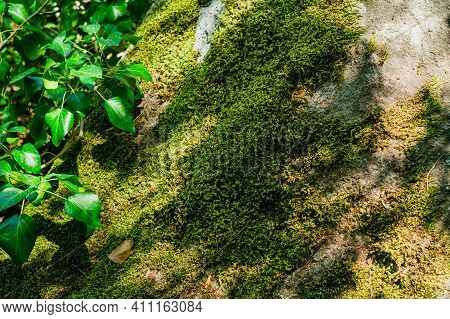 Mossy Giant Stone In A Nature Park