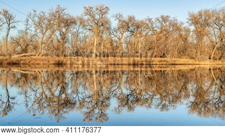 calm lake with blue heron rookery in winter or early spring scenery, one of natural areas along the Poudre River  in Fort Collins, Colorado