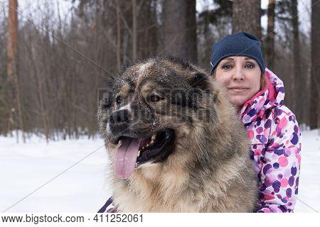 Beautiful Woman With A Big Fluffy Dog In Nature, Caucasian Guard Sheepdog