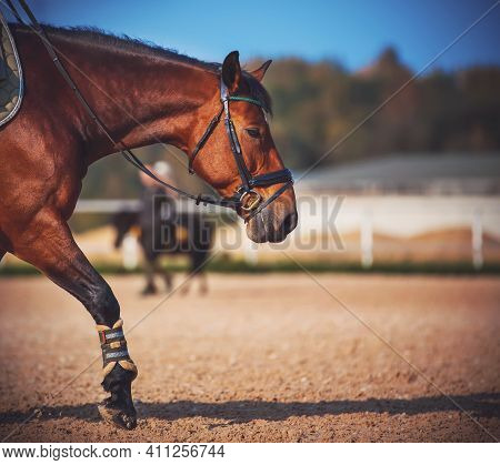 A Beautiful Bay Horse With A Bridle On Its Muzzle Steps Its Hooves On The Sand In The Arena During T