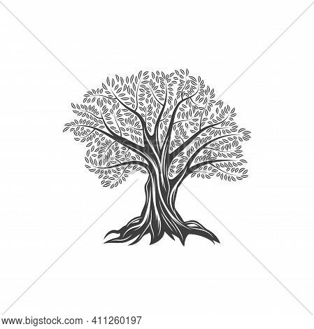 Olive Tree Icon With Leaves And Branches, Olive Oil And Food Vector Flat Line Label. Olive Tree Sign