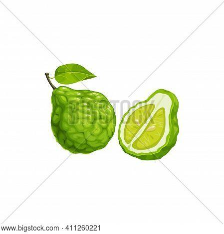 Bergamot Green Citrus Fruit Whole And Cut Isolated Realistic Icon. Vector Orange Fruit, Tropical Exo