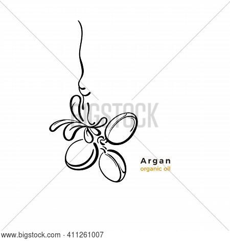 Argan Tree Label. Vector Art Line Nuts, Graphic Leaves. Sketch Illustration On White Background. Org