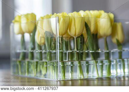 Yellow Tulips In A Transparent Vase. Unusual Bouquet. Square Vase