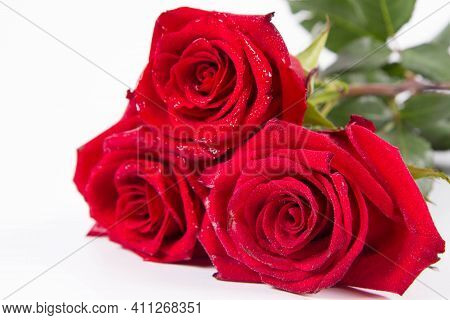 Red Roses, Covered With Drops Of Water, On A White Background