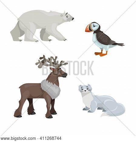 Arctic Animals Set. Polar Bear, Arctic Puffin Bird, Reindeer And Polar Ermine. Cartoon Flat Design.