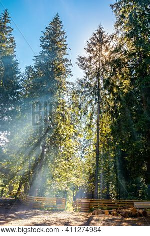 Sunlight Through Trees And Morning Mist. Beautiful Forest Nature Background. Wonderful Sunny Weather