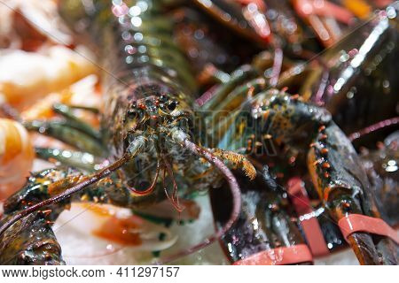 Sea Fresh Lobster Lying On Ice For Sale At The Boqueria Market, Barcelona, Spain.seafood Concept. Ra