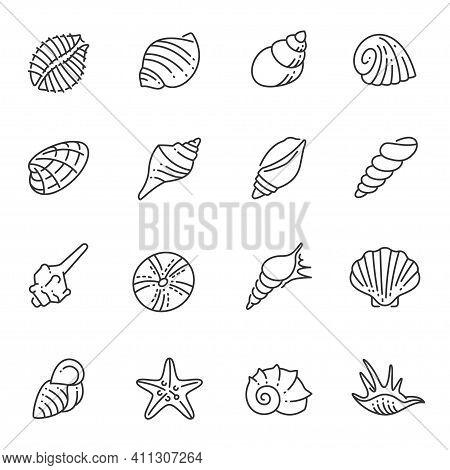 Set Of Monochrome Contour Sea Shells Line Icon Ocean Underwater Wildlife Shellfish Nautical Mollusk